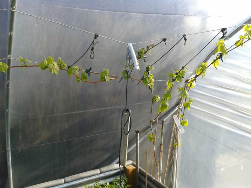 garden-vine.jpg